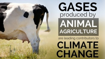 animal-agriculture
